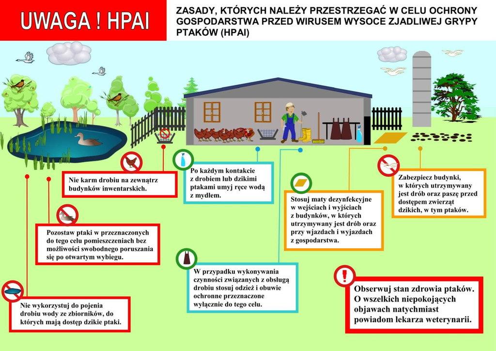 2019-01-07-ptasia-grypa-zasady-HPA.jpeg