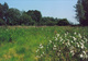 Późną wiosną na łąkach masowo rozkwitają wełnianki  foto: Krzysztof Duniec