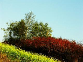 Galeria Galeria zdjęć - przyroda